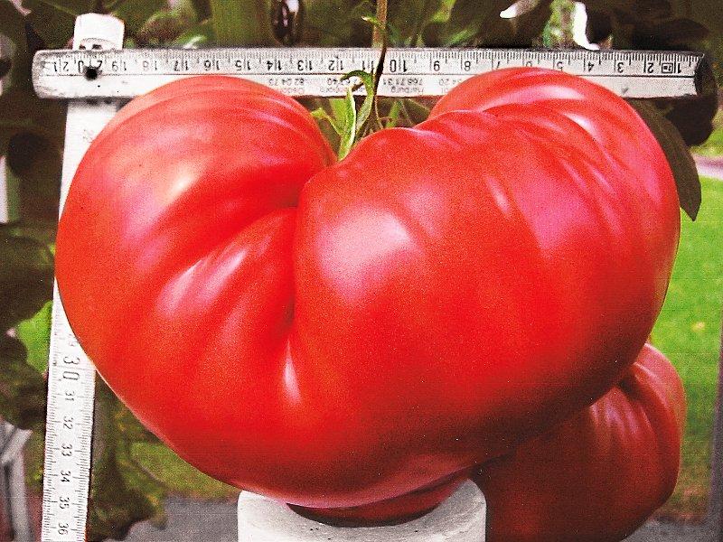 Deutscher Rekord Für Tomaten